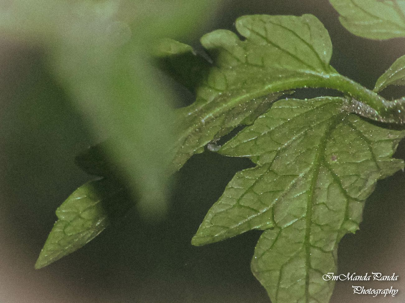 The beauty of nature in a leaf <3