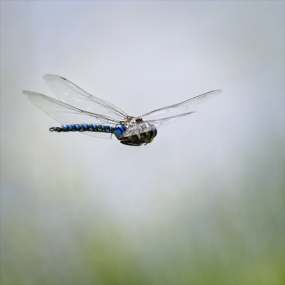 A dragonfly flying above a small pond...