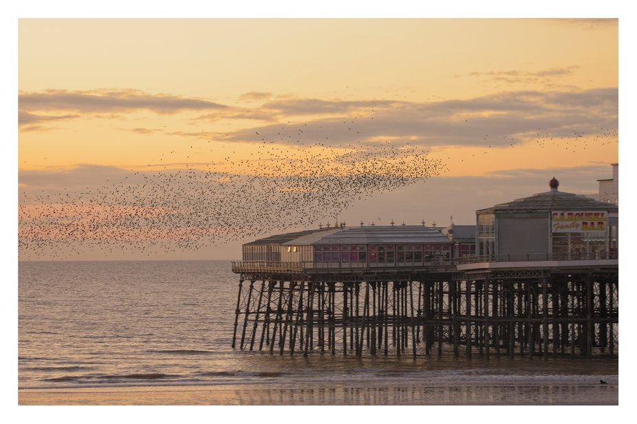 Image of the end of Pier in Blackpool during sunset that caught a murmuration of Starlings