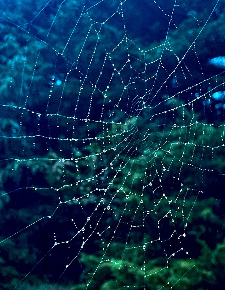 A spider web after an early morning shower