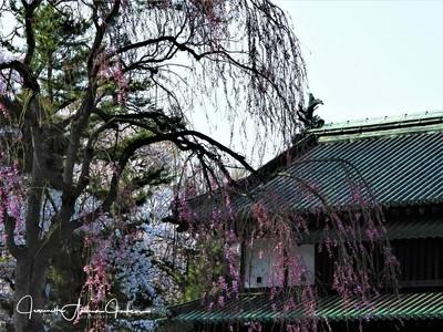Hirosaki Castle Park Gate