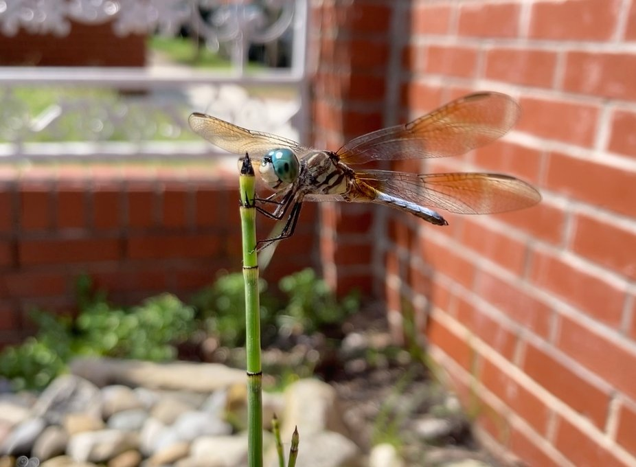 I have a slight obsession with dragonflies. They just are always there during really dark times. ...