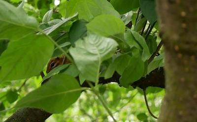 Hidden chipmunk