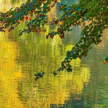 My Pond Impression