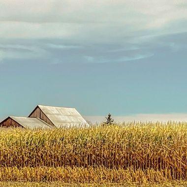 Barn roofs