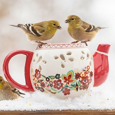 Tea for Goldfinches