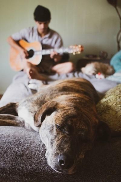 Dog and music