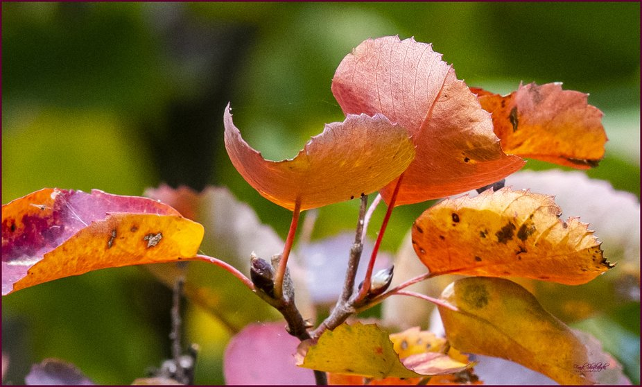 Color of Autumn