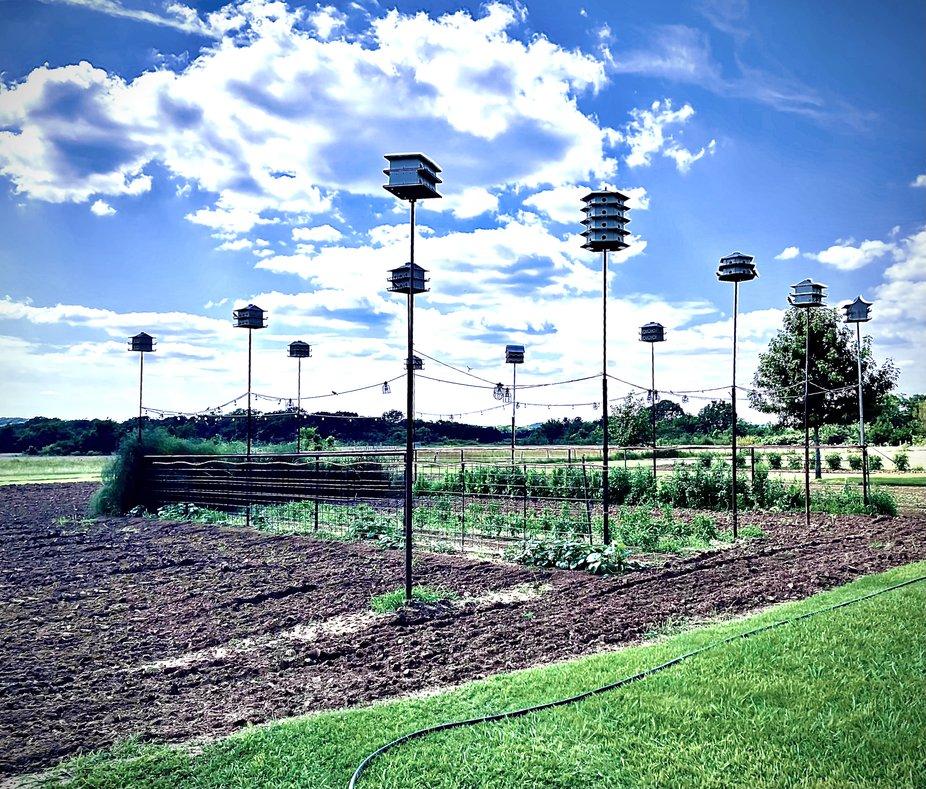 A garden in rural Oklahoma