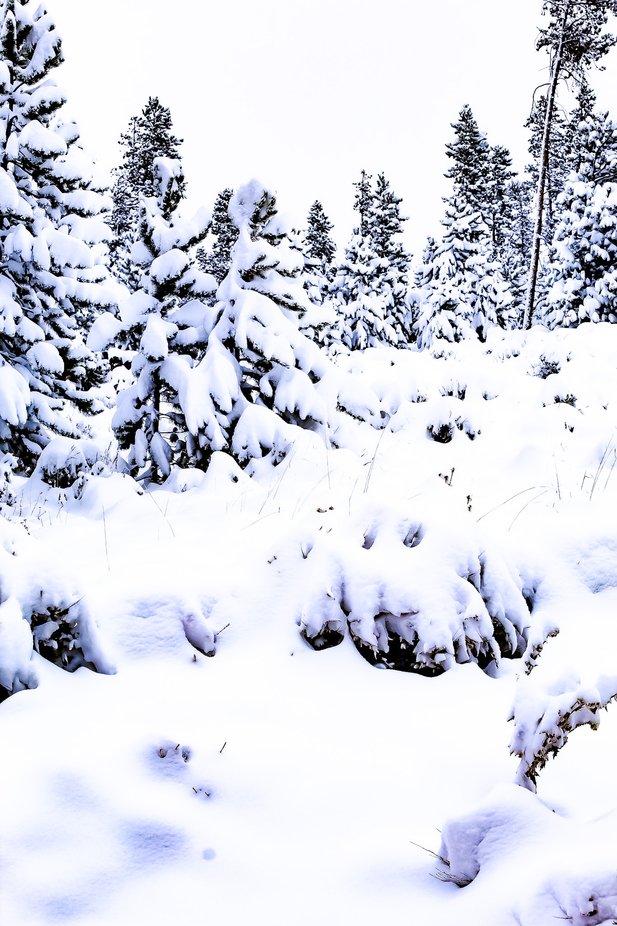 Snow day in Colorado